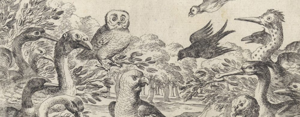 Parlement van vogels