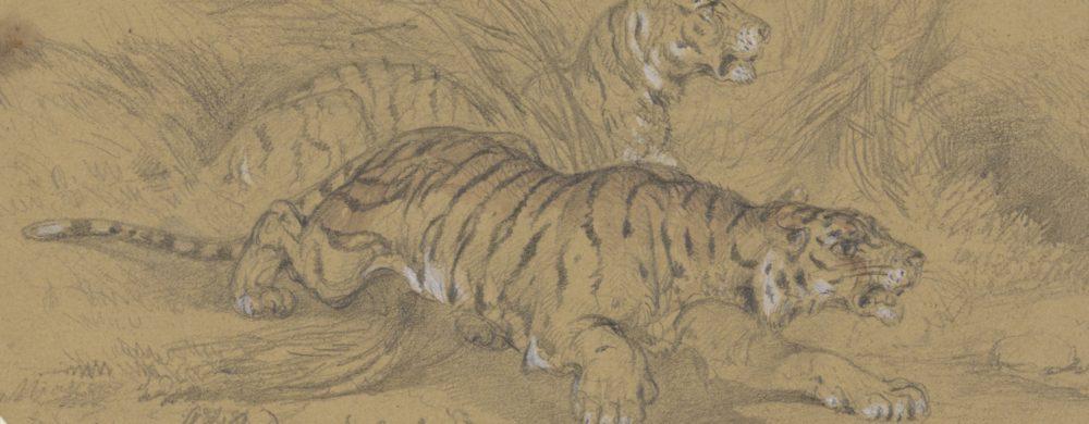 Twee tijgers sluipend door het gras